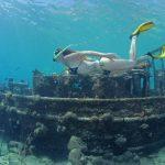 Tugboat op Curacao ontdekken